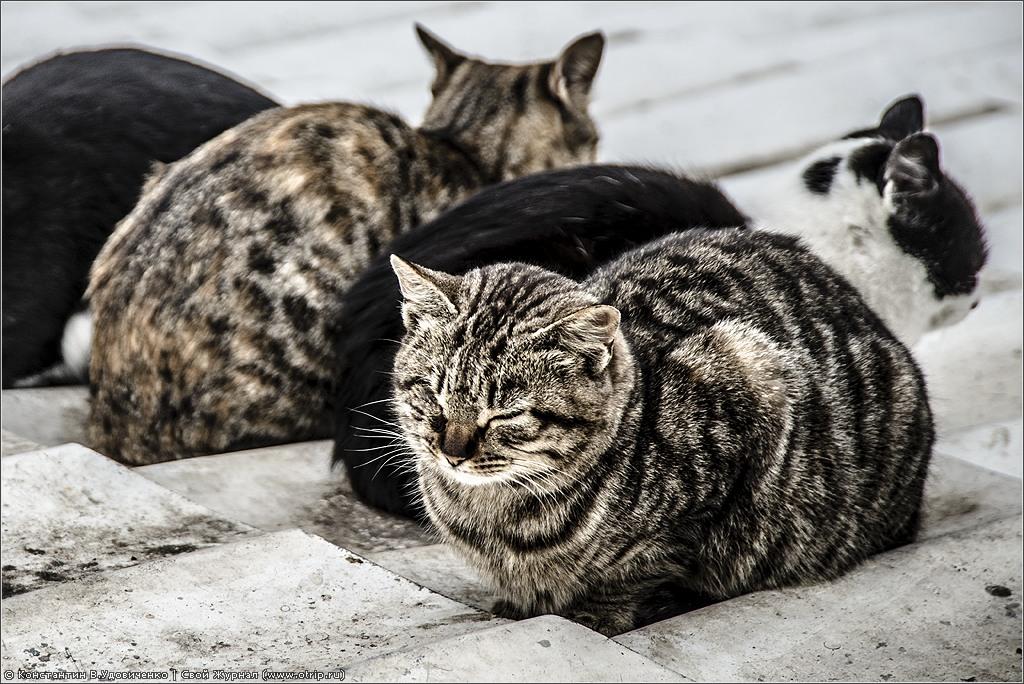 119_9216s.jpg - Крым. Алушта. (01.01.2014)