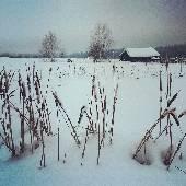 Зимний камыш заколосился... #SaltG2014