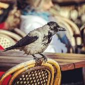 Птичка. Где-то на площадях Риги. #exifML