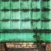Растительность. #смоленск